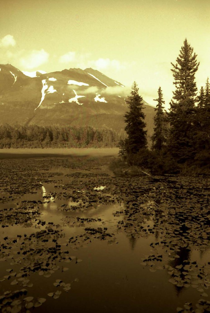 Mountains and Lily Pads