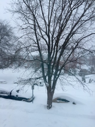 car buried in snow with tree